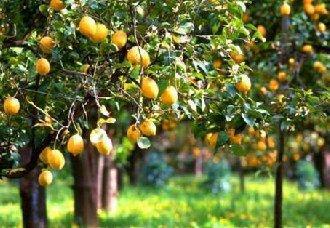 果树可以混栽呢?几种不可以混栽的果树