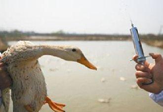 黑龙江将增强养殖场的防疫消毒意识 切断动物疫病传播途径