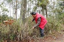 重庆黔江实施林业精准扶贫 计划选聘300名生态护林员