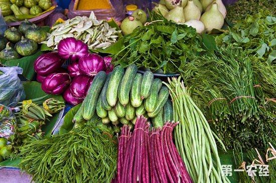 内蒙古包头22种主要蔬菜一周价格行情分析