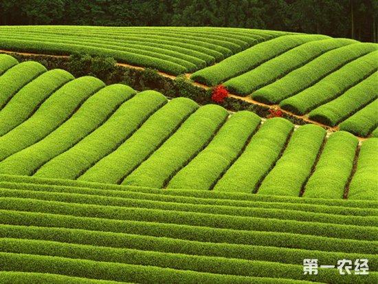 北京:智慧农业创新发展研讨会顺利召开