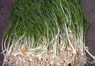 胡葱要怎么种?胡葱的种植技术