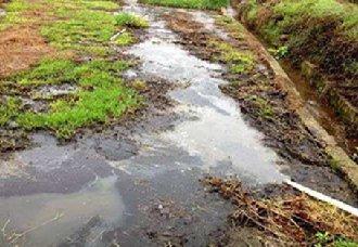 广州番禺区将进行控制畜禽养殖污染整治工作
