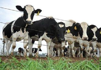 江苏召开畜牧业绿色发展推进会 推进畜牧业发展进程