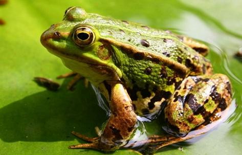 四川涂场村:青蛙养殖引领者贫困户走上致富之路