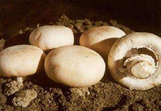 双孢菇一斤多少钱?