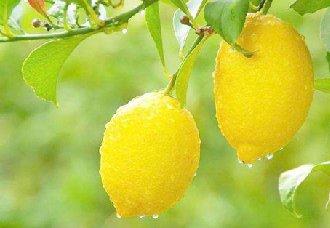柠檬常见的病虫害以及防治措施