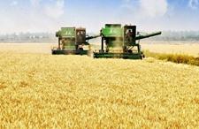 <b>冬小麦大面积机收即将开始 全国预计将投入64万台联合收割机</b>