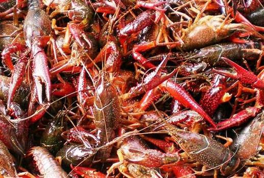 养殖小龙虾让他成功脱了贫,还带领村民走上致富之路