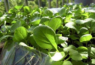 贵州务川红丝乡开展蔬菜种植技能培训