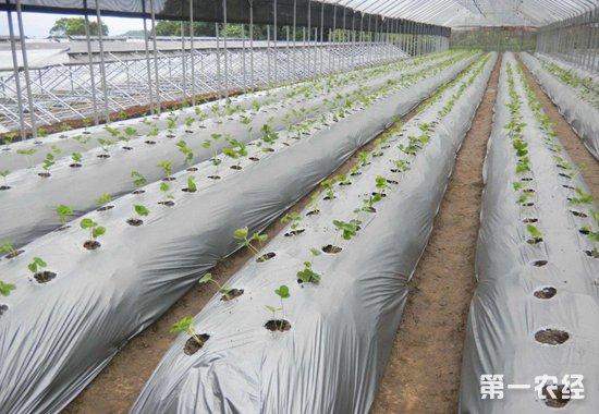 河北省:农膜使用量12万吨 回收率力争达75%