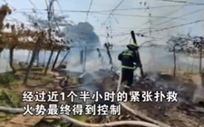 果农以为消防救火要收费 果园失火迟迟不肯报警