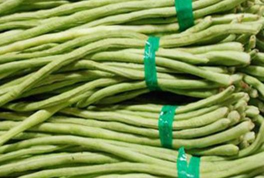 """豆角产业为他们带来致富的""""绿色希望"""""""