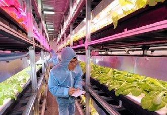 """<b>智能LED植物工厂,颠覆""""土地利用和农作方式""""的技术</b>"""