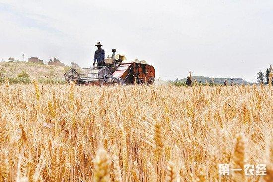 河南省启动夏小麦收购方案 收购价较去年下降0.03元/斤