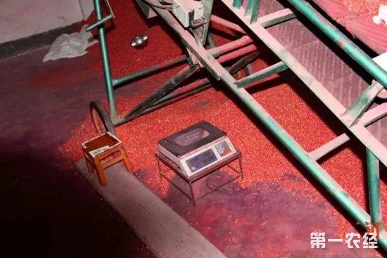 四川南充破获一起涉案20余万元的假种子案件