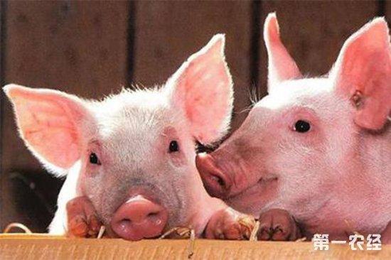 手工制作竖立书签猪
