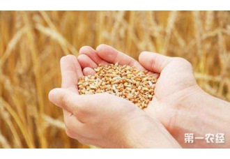 藏粮于技:科技手段维持粮食供求平衡,提高粮食生产效率和水平