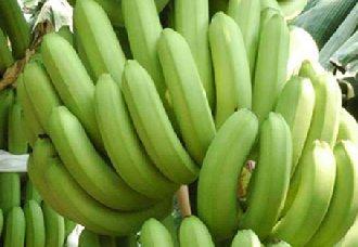 <b>柬埔寨已成亚洲最大的香蕉出口国家之一</b>