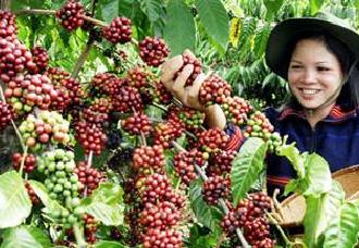 越南10年内力争打造全球农产品贸易中心