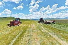 四川红原:畜牧业试点6年多 种草养牛成常态