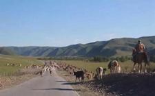 3000牧民几十万头只牛马羊的大迁徙行动