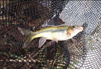 夏季养鱼要如何防止水质变差?以下三点要注意