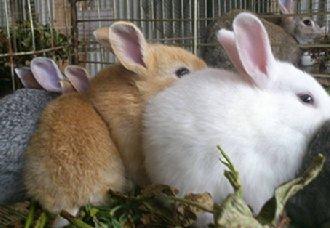 长毛兔要怎么安全过冬?以下五个方法要注意