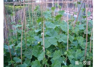 菜园害虫不打药的防治方法