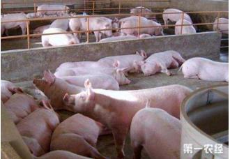 <b>在非洲猪瘟背景下,建议猪场谨慎这些危险行为</b>