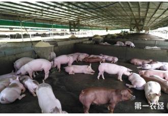 仔猪缺铁的症状以及补铁的方法
