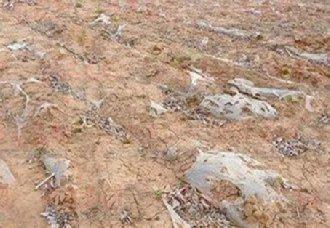 安徽宿州将全面推进农田白色污染治理工作