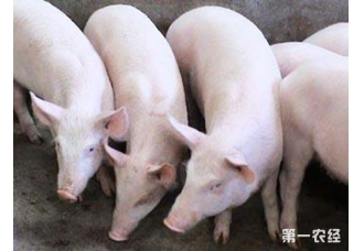 <b>东北、华北猪价全线上涨,西南地区跌势明显</b>