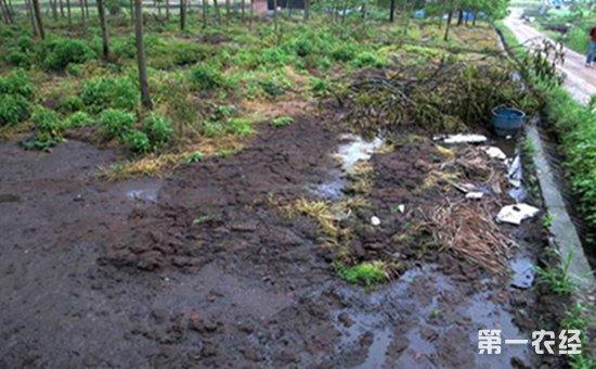 畜禽养殖污染