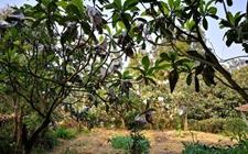 农民给果园盖房看守果林,这样的建筑违章吗?
