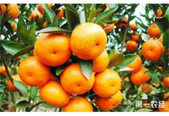 柑橘要怎么保果?柑橘的保果技术