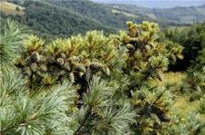 吉林通化:绿色理念引领转型 打造林业经济强市