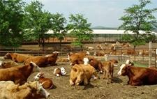 陕西铜川:财政补贴发展生态高效畜牧业