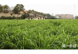 牧草要怎么进行干燥处理?牧草干燥的处理方法