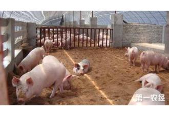 <b>猪肺疫的症状以及防治措施</b>