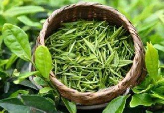 饮用绿茶要注意什么?注意以下四点
