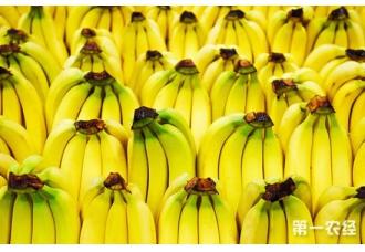 香蕉束顶病的症状以及防治措施