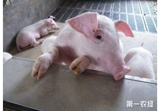 <b>常见的猪寄生虫疾病以及防治措施</b>