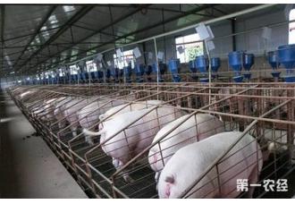 东北生猪供应紧缩,猪价短期内或还有上涨空间