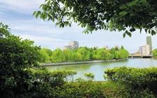 绿色城市:让森林走进城市,让城市拥抱森林