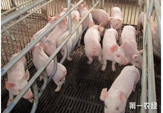 面对形势如此好的猪价,那么到底该不该补栏呢?