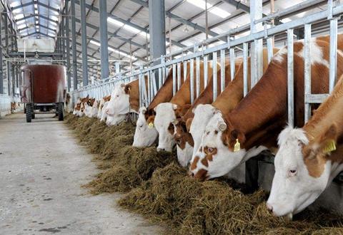 甘肃肃南明花乡多举措推动畜牧业转型升级发展