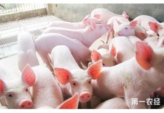 <b>政策鼓励养猪:贷款门槛降低,续贷更便捷</b>
