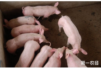 <b>猪营养代谢性疾病的发病特点以及防治措施</b>