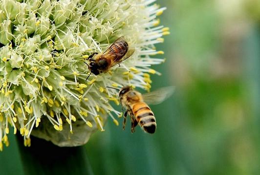 """养殖蜜蜂,他走出了一条""""甜蜜""""致富路"""